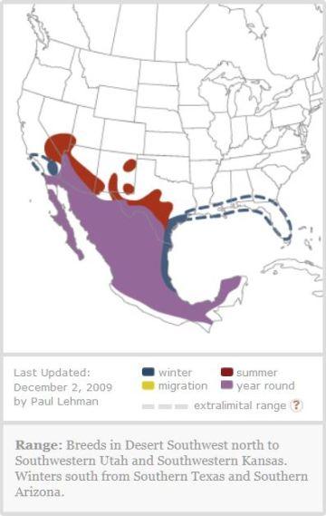 Vermilion Flycatcher U.S. range   BirdFellow_com